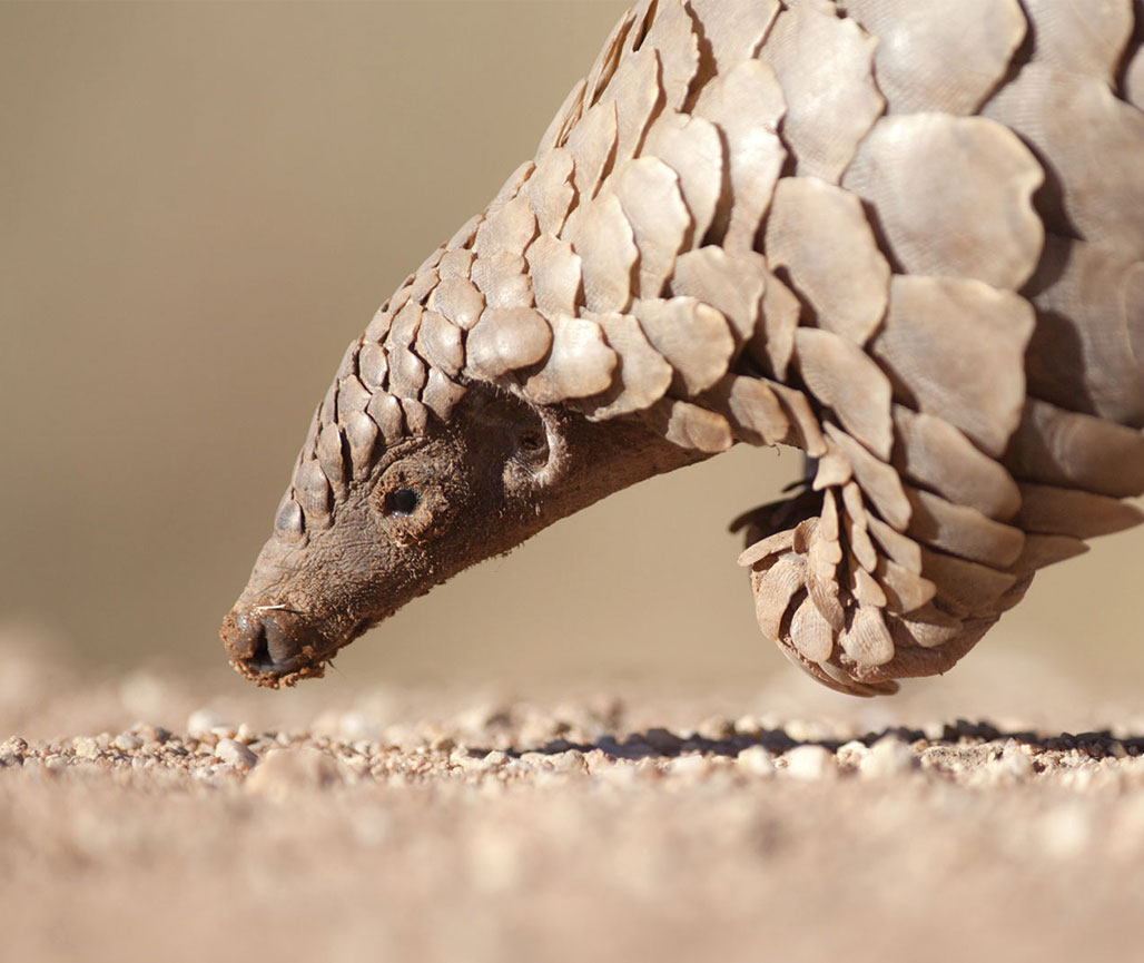 Taiwan Archives - The Pangolin Reports